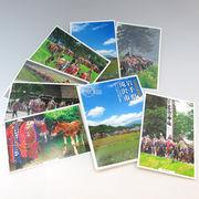 「滝沢市観光協会 チャグチャグ馬コ絵ハガキセット(8枚入り)」の商品イメージ